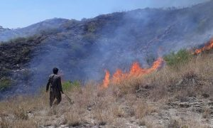Fires decimate 815 acres of forest in KP: Assembly told