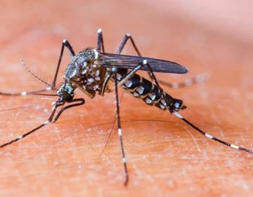 dangue virus in kpk
