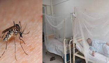 11 fresh dengue cases reported in landikotal