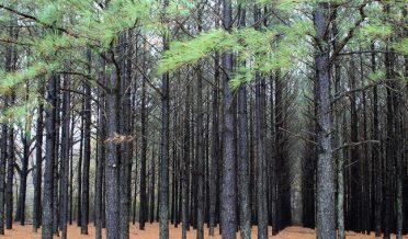 malakand-tree-plantation