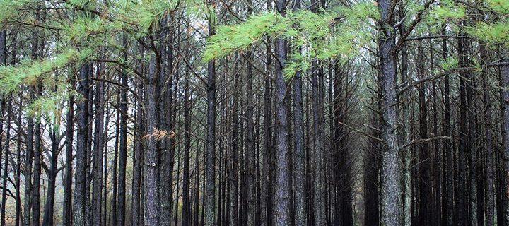 malakand tree plantation